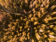 Straßen und Bäume stockfotografie