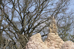strażowy obowiązku meerkat Obraz Royalty Free