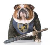 Strażowy pies zdjęcia stock