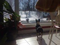 Strażowy pies Obrazy Stock