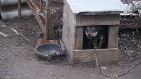 Strażowy pies na łańcuchu w budka barkentynach zbiory