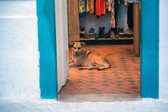 Strażowy pies Fotografia Stock