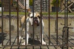 Strażowy pies Obrazy Royalty Free