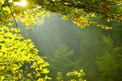 Straal van licht Stock Foto