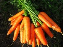 Straal van oranje wortelen op een logboek Stock Fotografie
