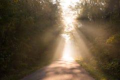 Straal van zon lichte komst hoewel bomen op lege weg Royalty-vrije Stock Afbeeldingen
