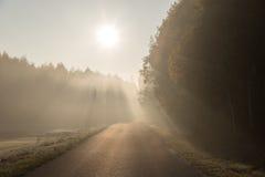 Straal van zon lichte komst hoewel bomen op lege weg Stock Afbeelding