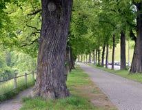 Straat in Berne Royalty-vrije Stock Foto