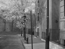 Straat in Brooklyn Stock Afbeelding