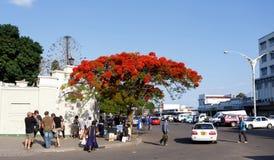 Straat in Bulawayo Zimbabwe Royalty-vrije Stock Foto