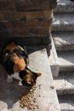 Straat Cat Eating Kibble in Rome, Italië royalty-vrije stock foto's