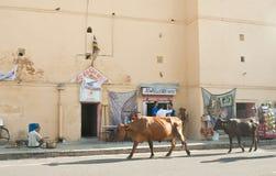 Straat in de stad van Jaipur Rajasthan, India Stock Foto