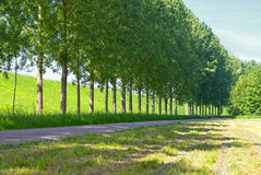 Straat langs een rij van bomen Stock Foto