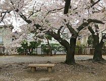 Straat in Matsumoto tijdens het bloeien van sakura Royalty-vrije Stock Afbeelding