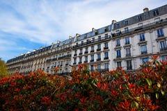 Straat met bloemen in Parijs Stock Foto's