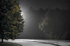 Straat met boom in avond Royalty-vrije Stock Afbeeldingen