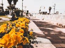 Straat met gele bloemen in het centrum van Nahariya, Israël Royalty-vrije Stock Afbeelding