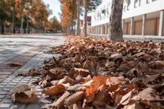 Straat met gevallen bladeren ter plaatse en bomen op de achtergrond stock fotografie