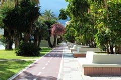 Straat met tropische bomen stock foto