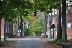 Straat van bladeren Stock Foto