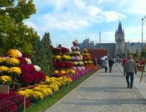 Straat van Iasi, Roemenië Royalty-vrije Stock Foto