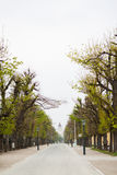 Straat in Wenen Stock Foto's