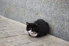 Straat zwart-witte kat stock fotografie