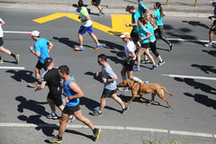 Straatagenten bij de 29ste marathon van Belgrado Royalty-vrije Stock Foto's