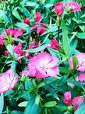 Straatbloemen Stock Afbeelding