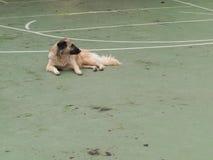 Straathond op het gebied van het straatvoetbal Stock Foto