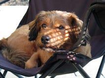 Straathond op stoel Stock Afbeelding