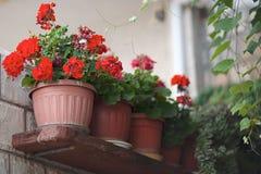 Straathoogtepunt van kleurrijke bloemen Typische openluchtstraat buiten in de zomer stock afbeeldingen