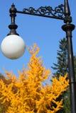 Straatlantaarn in het park op een achtergrond van geelgroene bomen stock fotografie