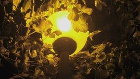 Straatlantaarn onder een boom bij nacht in dark met geel licht close-up stock footage