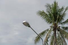 Straatlantaarns met een donkere kokosnoot als achtergrond royalty-vrije stock foto