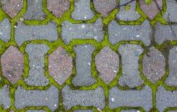 Straatstenen en mos tussen bakstenen Textuur royalty-vrije stock afbeeldingen