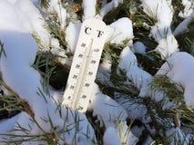 Straatthermometer met een temperatuur van Celsius en Fahrenheit in de sneeuw naast een jonge pijnboom stock fotografie