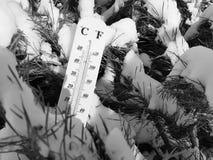 Straatthermometer met een temperatuur van Celsius en Fahrenheit in de sneeuw naast een jonge pijnboom stock afbeeldingen