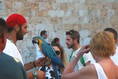 Straatuitvoerder in Dubrovnik Stock Fotografie