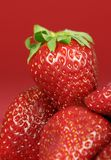 Straberries on Red Stock Image