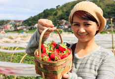 Straberry Farm in Baguio City, Philippines. Baguio City, Philippines- May 23, 2013: A local tourist showing her freshly picked strawberries from the strawberry Royalty Free Stock Photo
