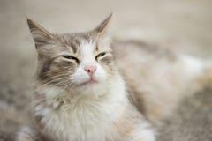 Strabisme du chat Photos stock