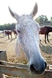 Strabisme du cheval photo libre de droits