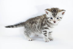 Strabismus, squint eyed kitten Royalty Free Stock Photos