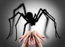 Strach, czupiradło, pająka cień na ścianie Fotografia Royalty Free