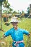 Strach na wróble odzieży koszula i rolnika kapelusz w polu i zdjęcie royalty free