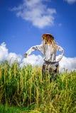Strach na wróble w Jatiluwih irlandczyka pola ryżowych tarasach, Bali, Indonezja zdjęcia stock
