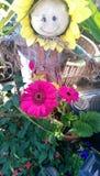 Strach na wróble i kwiaty Fotografia Royalty Free
