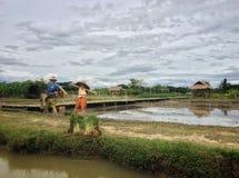 Strach na wróble kobiety i mężczyzny stojak wpólnie przy ryżowymi polami zdjęcia stock