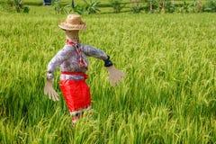 Strach na wróble przy ryżowym polem krajobrazu wiejskiego bali Indonesia obrazy royalty free